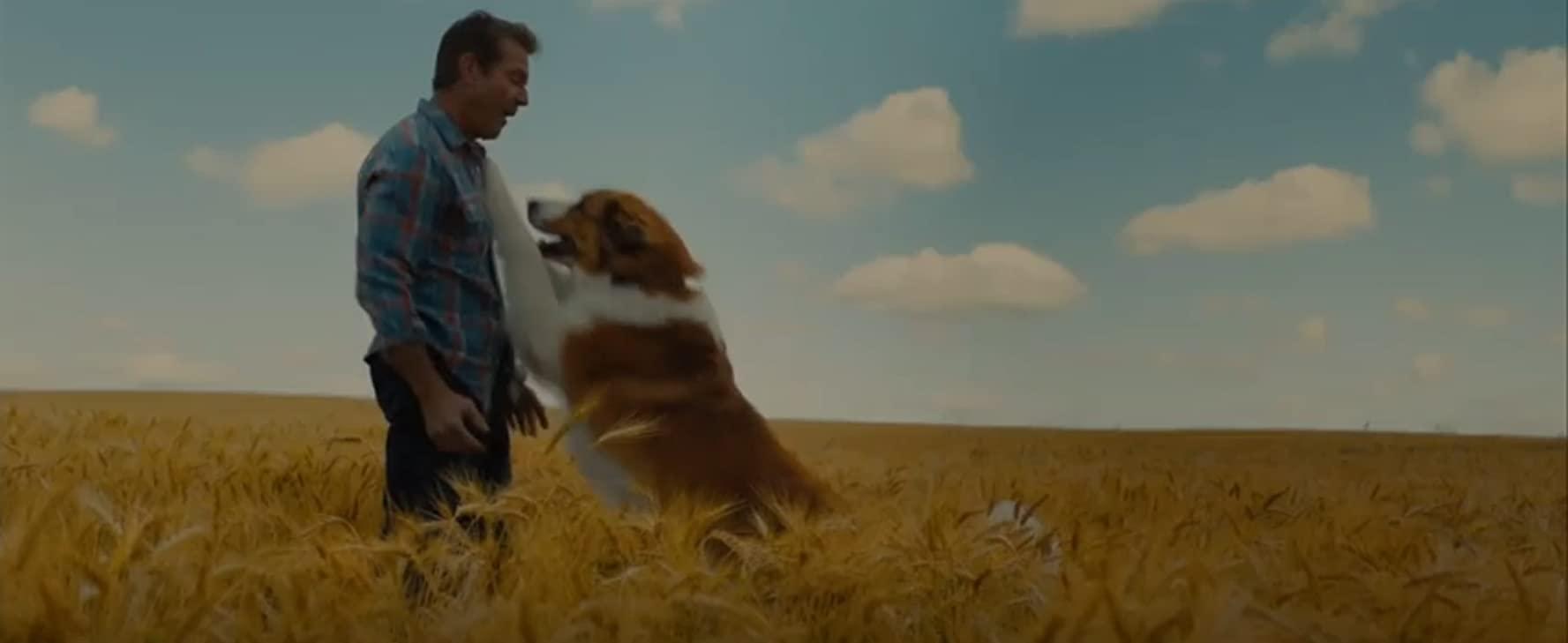 مشاهدة فيلم A Dogs Journey (2019) مترجم HD اون لاين