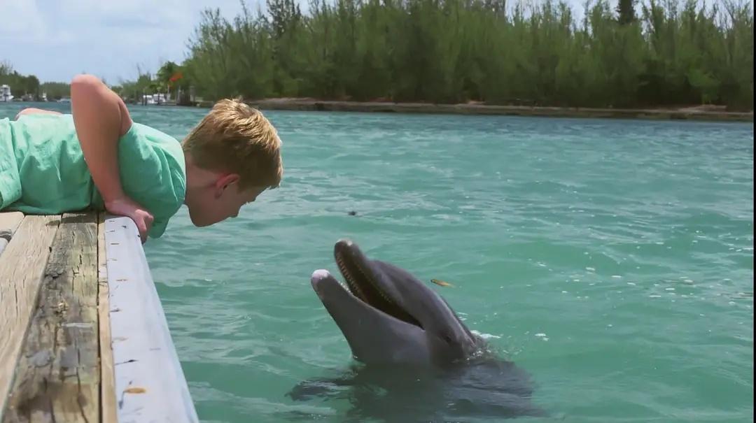 مشاهدة فيلم Dolphin Kick (2019) مترجم HD اون لاين